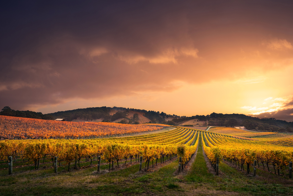 A vineyard the US